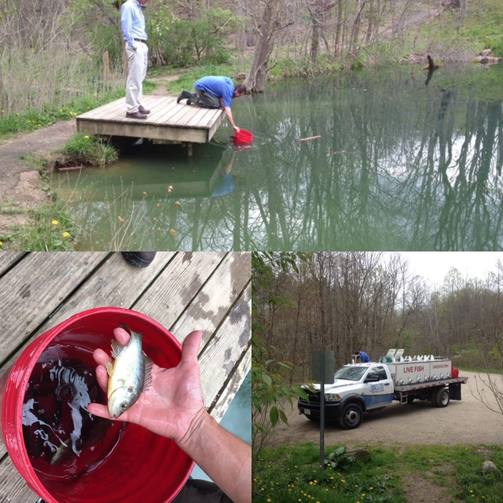 The Whitesburg Nature Preserve Fishing pond was restocked this week.
